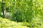 GH20102010-05-23_10-57-00.jpg